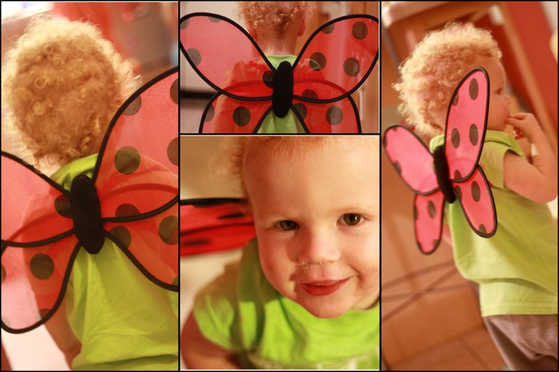 Boy butterfly collage